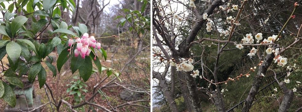 馬酔木と桃の花